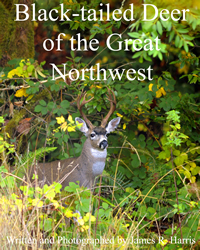 Black Tailed Deer of the Great Northwest